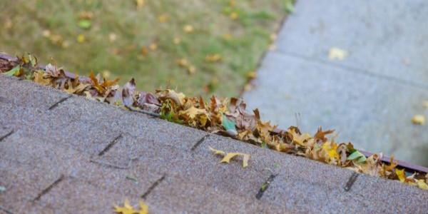 fallen yellow brown leaves on older roof in overcast lighting